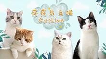 花花与三猫CatLive 2020